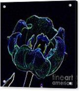 Tulip Glowing In The Moonlight Acrylic Print