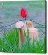 Tulip Hdr Acrylic Print