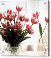 Tulip Acrylic Print by Jeanette Korab