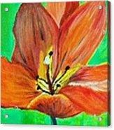 Tulip Acrylic Print by Kat Poon