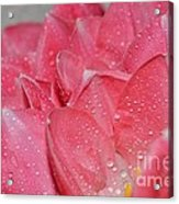 Tulip Lacery Acrylic Print