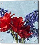 Tulip Macro 2 Acrylic Print