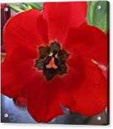 Tulip Mania 20 Acrylic Print