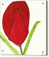 Tulip Of The Heart Acrylic Print