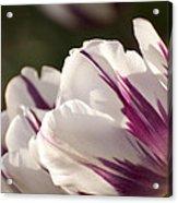 Tulip Pair Acrylic Print