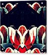 Tulip Panorama Acrylic Print