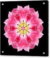 Tulip Peach Blossom IIi Flower Mandala Acrylic Print