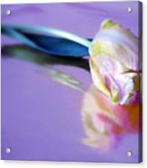 Tulip Reflected Acrylic Print