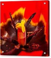 Tulip Stamp Acrylic Print