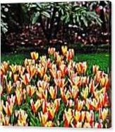 Tulip Stripe Garden Acrylic Print