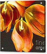 Tulip Study 2 Acrylic Print