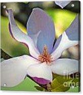 Tulip Tree Bloom Acrylic Print