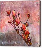 Tulip Tree Budding Acrylic Print by J Larry Walker