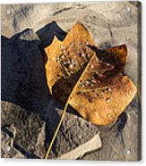 Tulip Tree Leaf - Frozen Raindrops In The Sunshine Acrylic Print