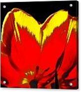 Tulip Underside Acrylic Print