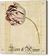 Tulip - Vivre Et Aimer S02t03tr Acrylic Print