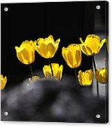 Tulips 6077 Acrylic Print