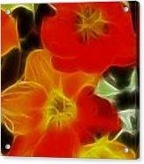 Tulips-6681-fractal Acrylic Print