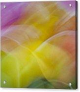 Tulips Abstract Acrylic Print