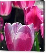 Tulips - Affectionately Yours 02 Acrylic Print