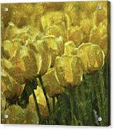 Tulips All Over Acrylic Print