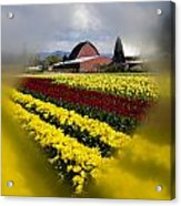 Tulips And Barn Acrylic Print