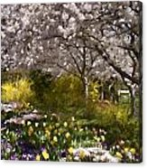 Tulips And Other Spring Flowers At Dallas Arboretum Acrylic Print