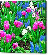 Tulips And Pansies And Grape Hyacinth By Lutheran Cathedral Of Helsinki-finland Acrylic Print