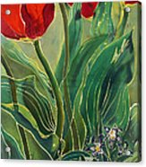 Tulips And Pushkinia Acrylic Print by Anna Lisa Yoder