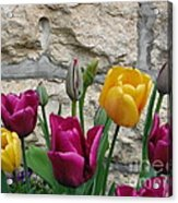 Tulips And Stone Acrylic Print