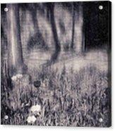 Tulips And Tree Shadow Acrylic Print