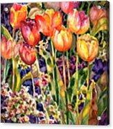 Tulips Acrylic Print by Ann  Nicholson