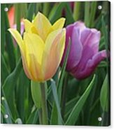 Tulips - Caring Thoughts 03 Acrylic Print