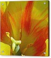 Tulips - Cheerful Energy 06 Acrylic Print