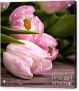 Tulips Closeup Acrylic Print