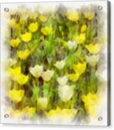 Tulips Everywhere Acrylic Print