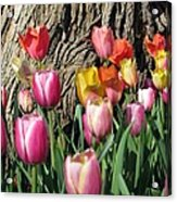 Tulips - Field With Love 07 Acrylic Print