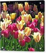 Tulips - Field With Love 35 Acrylic Print