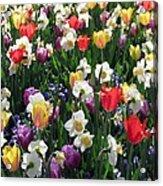 Tulips - Field With Love 58 Acrylic Print