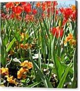 Tulips - Field With Love 64 Acrylic Print