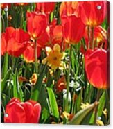 Tulips - Field With Love 71 Acrylic Print
