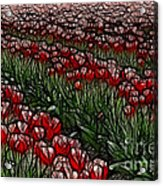 Tulips Fields Are Forever Acrylic Print