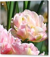 Tulips Flowers Garden Art Prints Pink Tulip Floral Acrylic Print