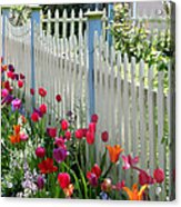 Tulips Garden Along White Picket Fence Acrylic Print