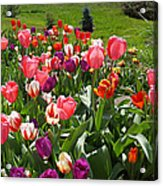 Tulips Garden Art Prints Colorful Spring Floral Acrylic Print