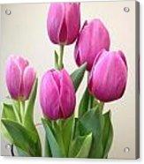 Tulips In Bloom Acrylic Print