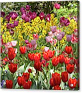 Tulips In St James's Park, London Acrylic Print
