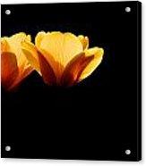 Tulips In The Dark Acrylic Print