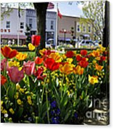 Tulips In The Spring Acrylic Print