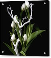 Tulips In Tree Branch Still Life Acrylic Print